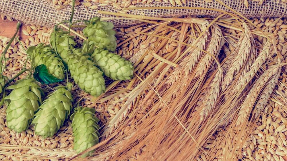 Hops, malt and golden ripe barley on old wooden table.
